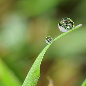 Big and Small by Ruben Dela Cruz - Nature Up Close Leaves & Grasses