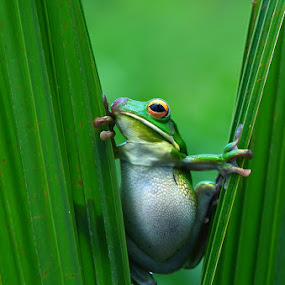 by Harry Aiee - Animals Amphibians