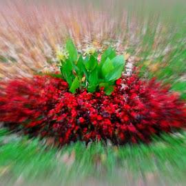by Joanna Borkowska - Nature Up Close Other plants