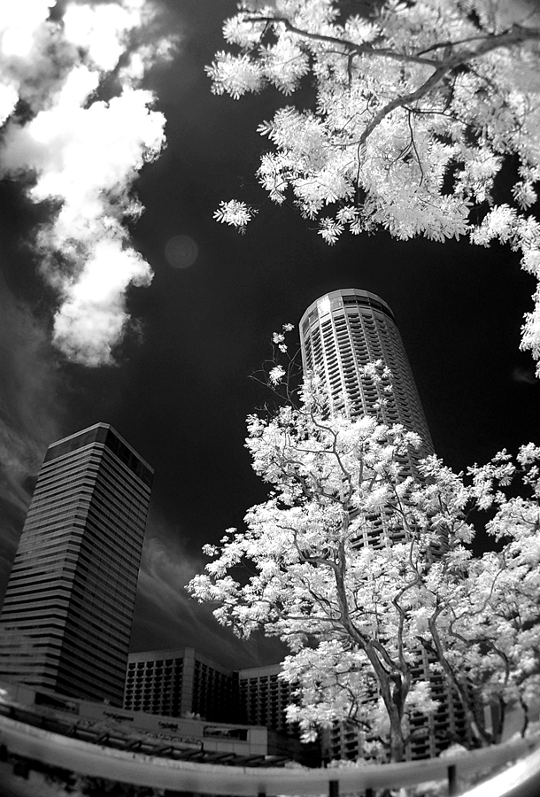 The white leaves by Barry Allan - Buildings & Architecture Office Buildings & Hotels ( pwcbuilding )