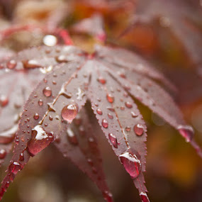 quietud. by Ken Quiñones Street - Digital Art Things ( red, leaf, rain )