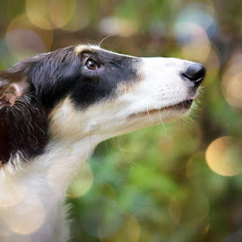 Magical by Lena Arkell - Animals - Dogs Puppies ( wolfhound, black and white, female, green, gold, dog, bokeh, borzoi,  )