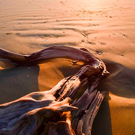 Towards the sun by Willem Pretorius - Nature Up Close Other Natural Objects ( sand, driftwood, brown, sunrise, beach )