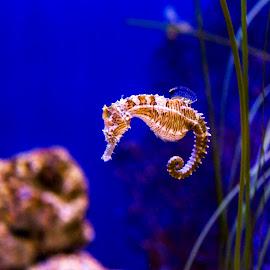 by Brook Kornegay - Animals Sea Creatures (  )
