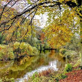 Down By The River by Ian Popple - Landscapes Travel ( water, colourful, autumn, leaves, river severn )