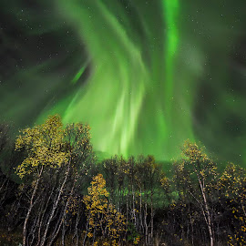 Autumn and dancing Aurora Borealis by Jens Andre Mehammer Birkeland - Landscapes Starscapes ( tree, autumn leaves, autumn, aurora borealis, aurora, trees, night, autumn colors, light, norway )