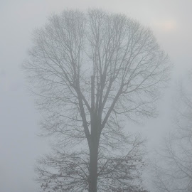 Tree in the Fog by Christy Stanford - Landscapes Weather ( foggy, winter, nature, tree, fog, weather )