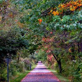 Autumn Respite by Howard Sharper - City,  Street & Park  City Parks ( autumn colors, cityscape, pathway, autumn leaves, park,  )