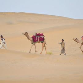 The Tzar Desert, India by Tejz TJ - Landscapes Deserts ( camel, desert, landscape,  )