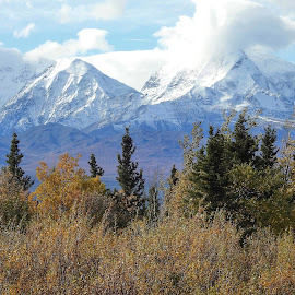 Changing Seasons by Patricia Phillips - Landscapes Mountains & Hills ( mountains alaska autumn snow- capped )