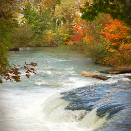 Niagra Falls River Side Pool by Robin Amaral - Landscapes Waterscapes ( niagra river, autumn colors, nature up close, riverside, tranquil, new york, trees, water fall, waterscape, flowing water, waterfall, autumn leaves, river )