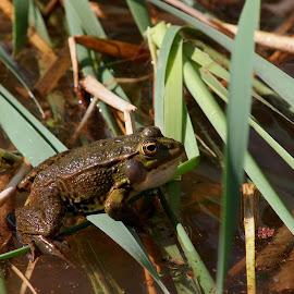 by José António Duarte Moura - Animals Amphibians