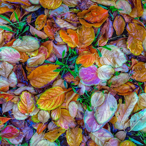 Persimmon leaf carpet by Suzanne Black - Nature Up Close Leaves & Grasses (  )