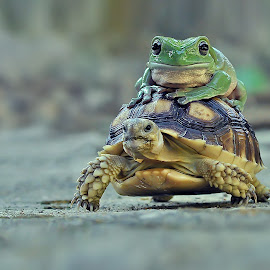 turtle by Yan Hidayat  - Animals Amphibians
