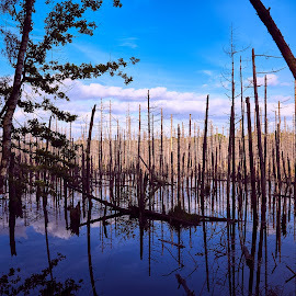 Water forest 2 by Wojciech Cricetulus Migratorius - Landscapes Forests ( clouds, sky, lake, forest, water mirror )
