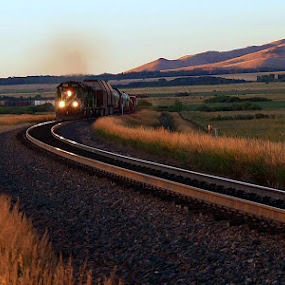 Morning Train in Montana by Diana Treglown - Transportation Other