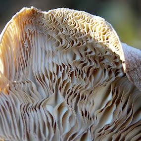 by OL JA - Nature Up Close Mushrooms & Fungi (  )