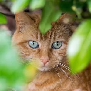 cat-1-2.jpg