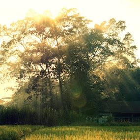 Magical Mist by Nadzli Azlan - Landscapes Prairies, Meadows & Fields