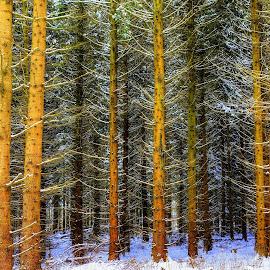 by Keld Helbig Hansen - Landscapes Forests