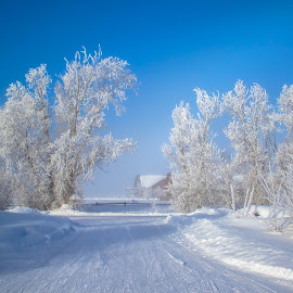 Cold Pathway to Blue by Chad Roberts - Nature Up Close Trees & Bushes ( blue sky, winter, cold, fog, snow, frost, morning, frozen,  )