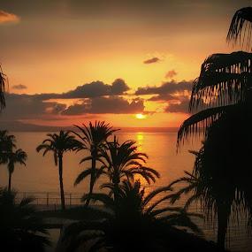Entre Palmeras - Sunrise between Palms by Antonio Navarro - Landscapes Sunsets & Sunrises