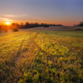 Warm sunrise by Justinas Kondrotas - Landscapes Prairies, Meadows & Fields ( field, trees, summer, sunrise, light )
