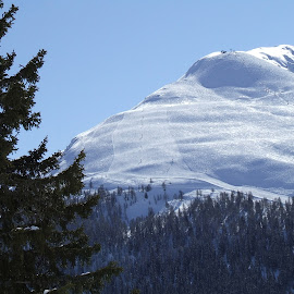by Serguei Ouklonski - Landscapes Travel ( mountain, sky, winter, range, cold, davos, snow, schatzalp, trees, travel, landscape, graubünden, fir )