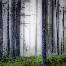 Forest of elfes by Ewa Nilsson - Landscapes Forests ( forest trees fog elfes lapland sweden )