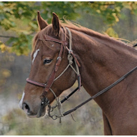 Harvest Brown by Lorraine D.  Heaney - Animals Horses