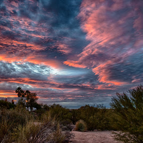 Tucson by Charlie Alolkoy - Landscapes Deserts ( desert, sunset, tucson,  )