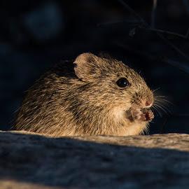 by Sandy Hurwitz - Animals Other Mammals