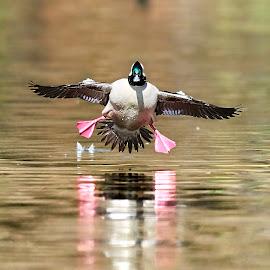 0 Bird 99944~Q by Raphael RaCcoon - Animals Birds