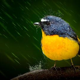 The rain run across by Sơn Hải - Digital Art Animals ( water, bird, tree, nature, digital art, rain )