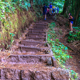 Stairway To Manoa Falls by Kathy Suttles - Buildings & Architecture Other Exteriors