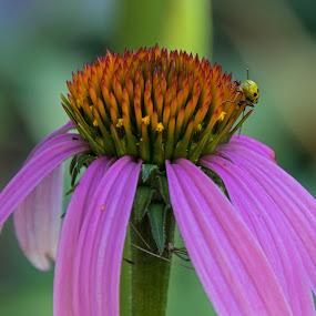 by Judy Florio - Flowers Single Flower