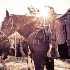 Waiting by Thomas Dilworth - Animals Horses ( farm, ranch, horse, colorado, animal,  )