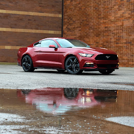 Mustang by Sam Reed - Transportation Automobiles ( rain, reflection, mustang, ford, ohio, columbus )