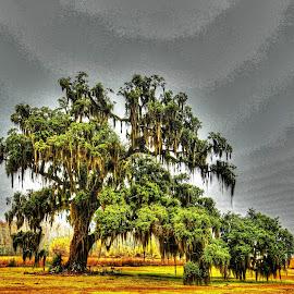Tree by Ron Olivier - Digital Art Places ( live oak tree,  )