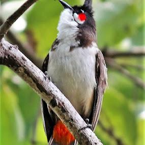 Unaware.. by Anoop Namboothiri - Animals Birds (  )