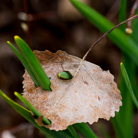 by Wilma Michel - Nature Up Close Leaves & Grasses
