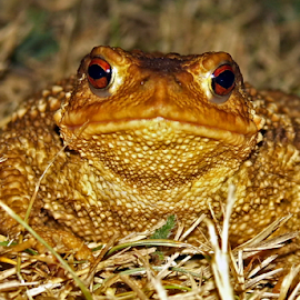 Giant by Ad Spruijt - Animals Amphibians