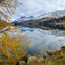Late Autumn by Haim Rosenfeld - Landscapes Mountains & Hills ( dreamy, mountain, wood, rock, yellow, drama, mistery, sky, spiritual, tree, cold, nature, autumn, snow, reddish, place, light, foreground, orange, colors, mood, image, atmosphere, lake, forest, picture, season, silence, trees, moody, view, natural, calm, exposure, reflection, europe, reflections, beauty, landscape, swiss, mountains, dramatic, switzerland, nikon, alps, clouds, water, green, beautiful, sils, scenic, morning, photo, red, color, outdoor, background, mist )