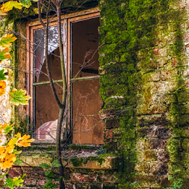 Abandoned building by Roberto Sorin - Buildings & Architecture Decaying & Abandoned ( plant, nobody, old, wood, exterior, brick, decline, stone, retro, architecture, house, warehouse, modern, camp, grunge, ancient, empty, dirty, ruins, construction, closeup, black, isolated, building, vintage, texture, green, white, broken, wooden, industrial, pattern, dust, background, factory, abandon, antique, design, wall, decay, abandoned,  )