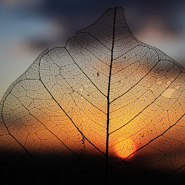 Time by Svetlana Micic - Nature Up Close Other plants ( old, sunset, nature up close, leaf, sun )