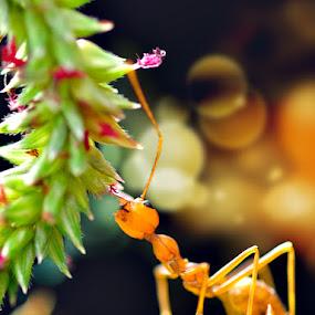semut yg berbikehbikeh by Hirza Kini - Animals Insects & Spiders ( semut, macro, ants )