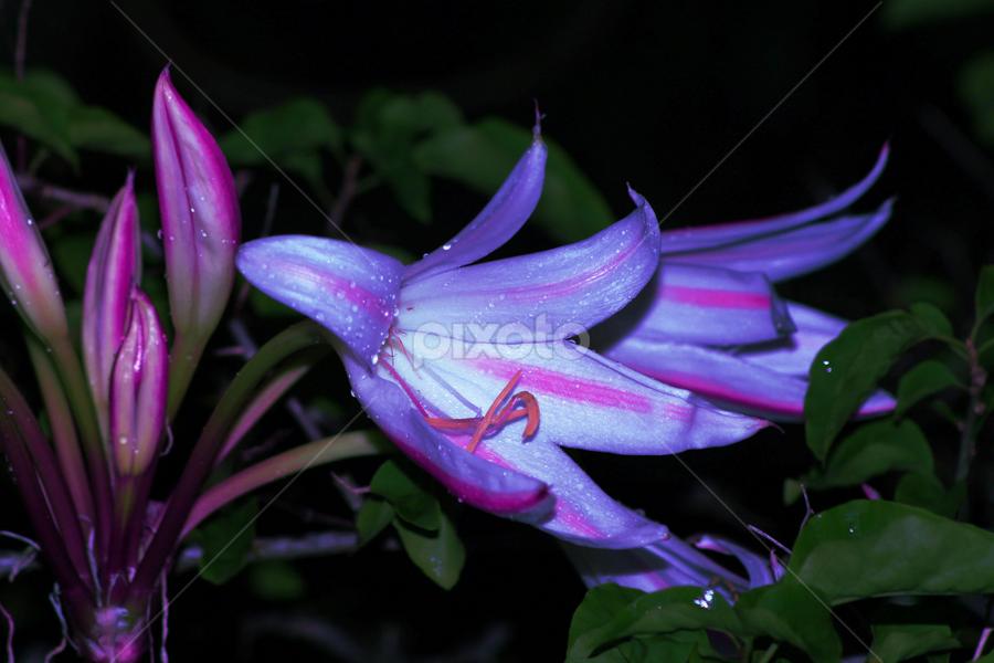 by John Wyne James - Nature Up Close Gardens & Produce