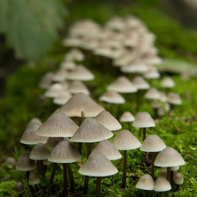 Mushrooms by Merina Tjen - Lim - Nature Up Close Mushrooms & Fungi ( fungi, wood, fall, forest, mushrooms )