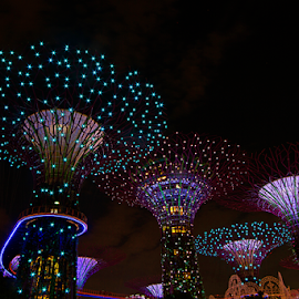 The Night Time of Gardens By The Bay by Steven De Siow - City,  Street & Park  Night ( gardens, night, nightscapes, lights, night photography,  )