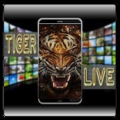 Download Tiger Live Wallpaper APK to PC